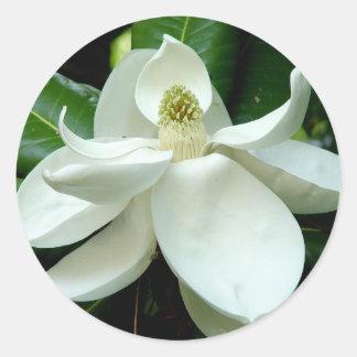 Magnolia Bloom Sticker