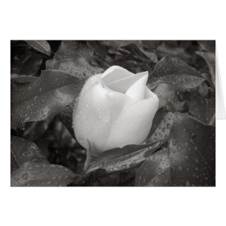 Magnolia Blossom in B&W Card
