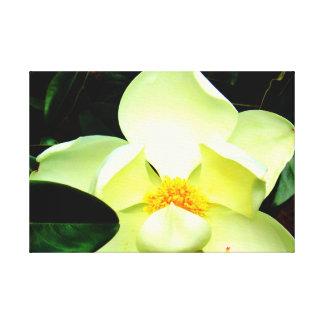 Magnolia Blossom Wall Art