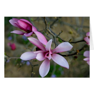 Magnolia Blossoms Notecard