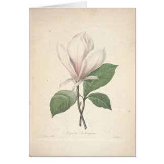 Magnolia By Redoute Sympathy Card