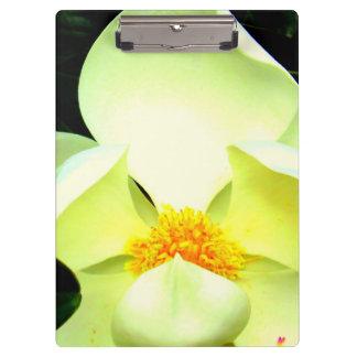 Magnolia Clipbord Clipboard