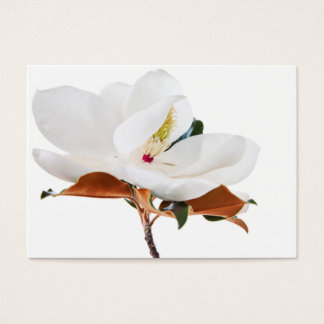Magnolia Flower White Magnolias Floral Blossom Business Card