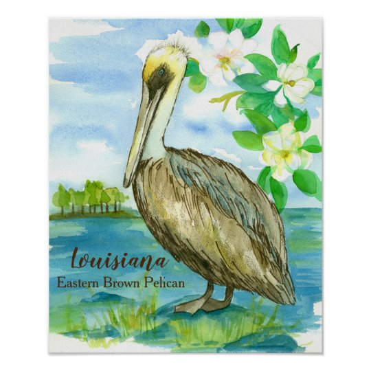 Magnolia Flowers Eastern Brown Pelican Poster