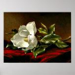 Magnolia Grandiflora-1895,_Martin Johnson Heade Poster