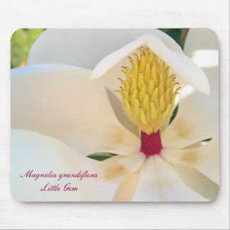 Magnolia grandiflora 'Little Gem' Mouse Pad