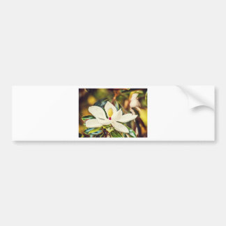 Magnolia in Bloom Bumper Sticker