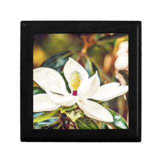 Magnolia in Bloom Gift Box