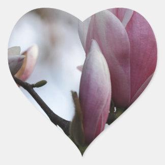 magnolia in bloom heart sticker