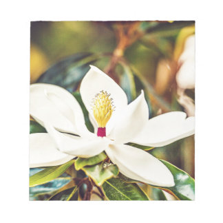 Magnolia in Bloom Notepad