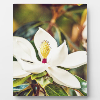Magnolia in Bloom Photo Plaques