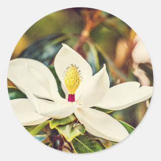 Magnolia in Bloom Round Sticker