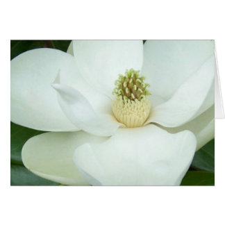 Magnolia magnified card