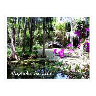 Magnolia Plantation Gardens Charleston SC Postcard