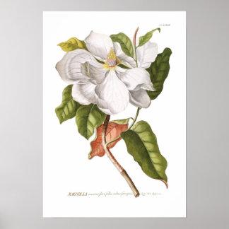 Magnolia. Poster