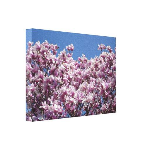 Magnolia Sky Stretched Canvas Print