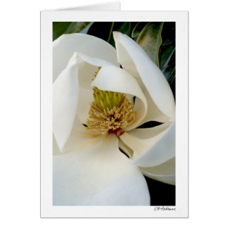 Magnolia Swirl Card