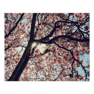 Magnolia Tree and SKY Poster