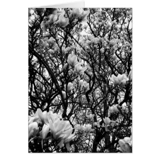 Magnolia Tree Card