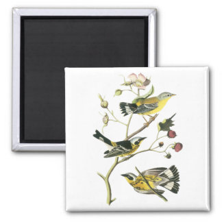 Magnolia Warbler, John Audubon Magnet