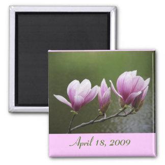 Magnolias, April 18, 2009 Square Magnet