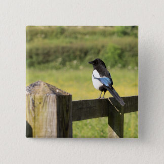 Magpie 15 Cm Square Badge