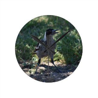 MAGPIE AUSTRALIAN BIRD RURAL QUEENSLAND AUSTRALIA CLOCK