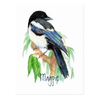 Magpie, Bird, Garden, Nature, Wildlife Postcard