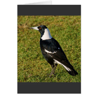 Magpie Cards