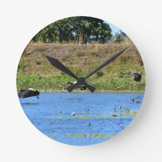 MAGPIE GEESE FLYING RURAL QUEENSLAND AUSTRALIA WALLCLOCK