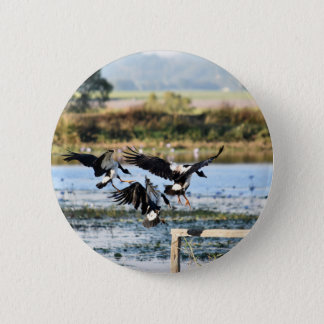 MAGPIE GEESE RURAL QUEENSLAND AUSTRALIA 6 CM ROUND BADGE