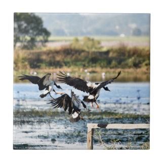 MAGPIE GEESE RURAL QUEENSLAND AUSTRALIA CERAMIC TILE