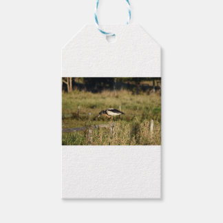MAGPIE GEESE RURAL QUEENSLAND AUSTRALIA GIFT TAGS