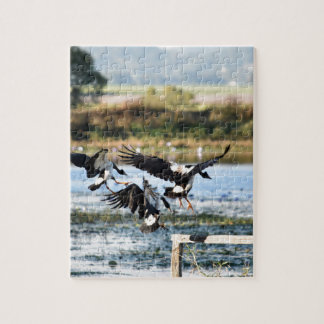 MAGPIE GEESE RURAL QUEENSLAND AUSTRALIA JIGSAW PUZZLE