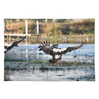 MAGPIE GEESE RURAL QUEENSLAND AUSTRALIA PLACEMAT
