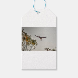 MAGPIE GOOSE AUSTRALIA ART EFFECTS GIFT TAGS