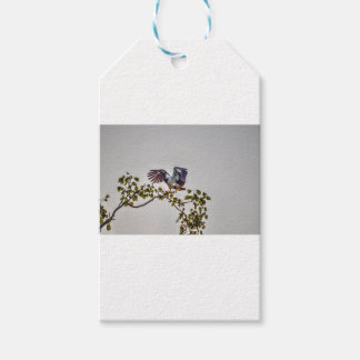 MAGPIE GOOSE IN FLIGHT AUSTRALIA ART EFFECTS GIFT TAGS