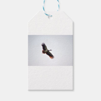 MAGPIE GOOSE QUEENSLAND AUSTRALIA ART EFFECTS GIFT TAGS