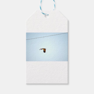 MAGPIE GOOSE RURAL QUEENSLAND AUSTRALIA GIFT TAGS