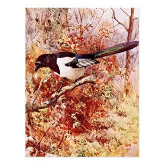 Magpie in Autumn Postcard