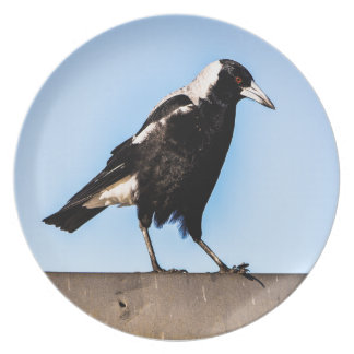 Magpie on a plate