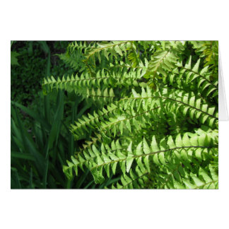 Maidenhair Ferns Father's Day Card