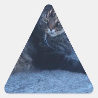 Main cool cat triangle sticker