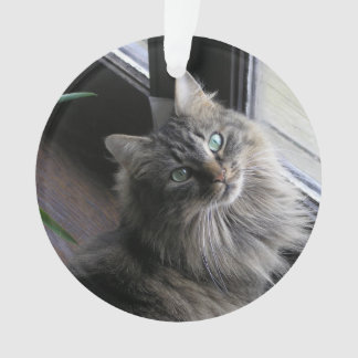 Main Coon Cat Ornament