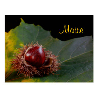 Maine Autumn Leaf With Nut Postcard
