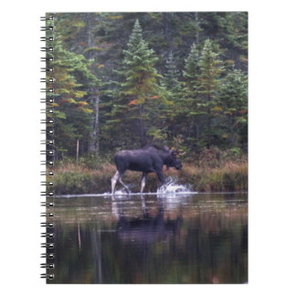 Maine Bull Moose Spiral Note Book