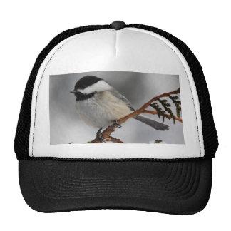 Maine Chickadee Cap