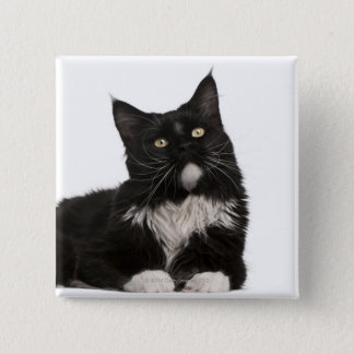 Maine Coon (15 months old) 15 Cm Square Badge