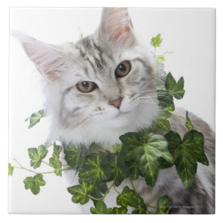 Maine Coon cat and ornament of ivy Ceramic Tile