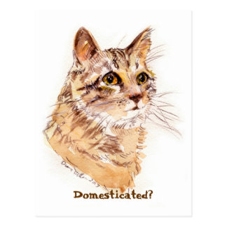 Maine Coon CAT:  Domesticated? postcard